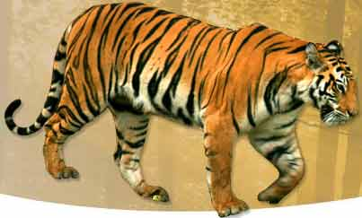 Tiger Wildlife